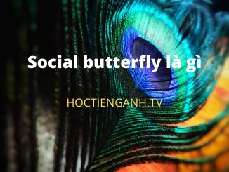 Social butterfly là gì