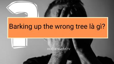 Barking up the wrong tree là gì?