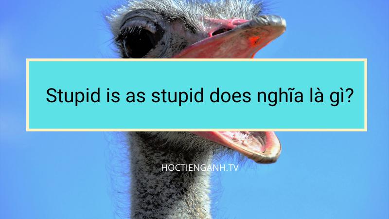 Stupid is as stupid does nghĩa là gì?